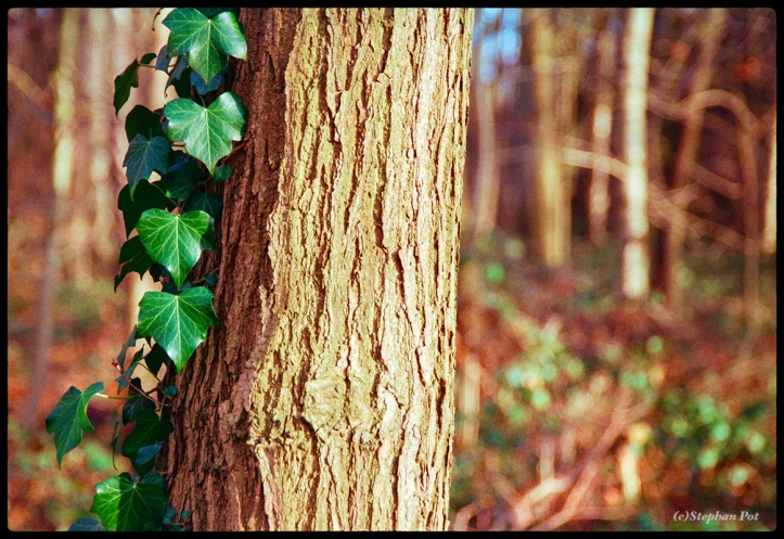 Ivy Nikon 50mm f1.4 and Agfa Vista 200