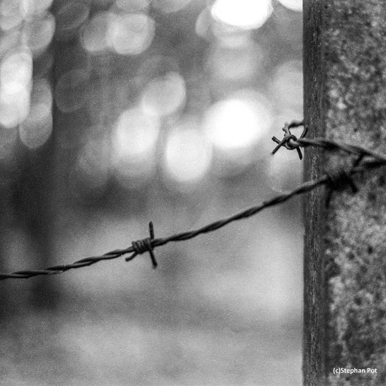 Barb wire (2015) Leicaflex SL with Summicron f2 50mm and loaded with Ilford FP4 Plus